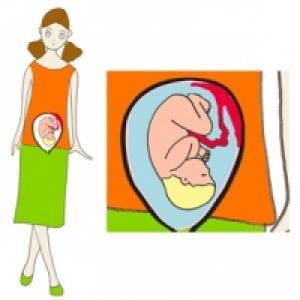 Taille de bébé à 8 mois de grossesse