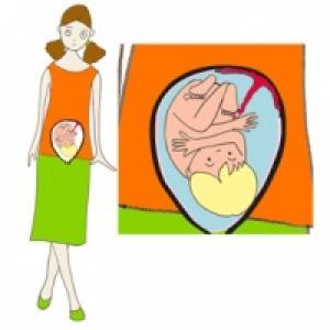 Après 9 mois bébé prend toute la place dans le ventre de maman
