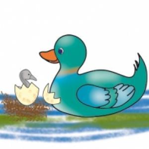 Naissance du vilain petit canard