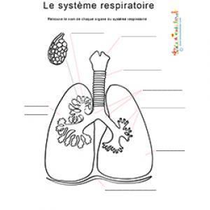 Nom des organes du système respiratoire, planche anatomique