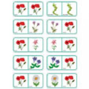 Dominos pour apprendre les fleurs 6