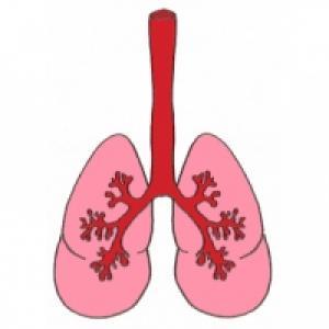 Les poumons terminent leur développement au 8 ème mois de grossesse