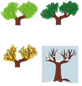 Activité pour comprendre l'évolution de l'arbre au fil des saisons