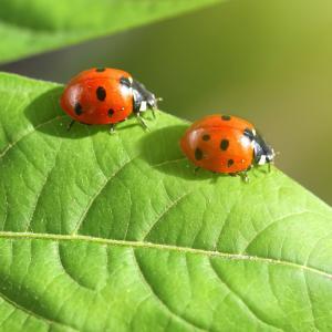 insecte - mot du glossaire Tête à modeler. Définition et activités associées au mot insecte.