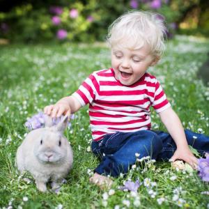 Choisir un lapin nain comme animal de compagnie des enfants. Comment choisir un lapin pour votre ou vos enfants ?