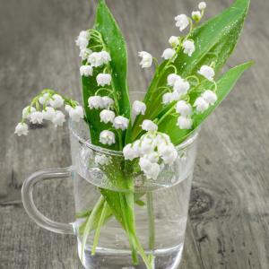 Originaire d'Asie, le muguet est un porte-bonheur largement offert le 1er mai à l'occasion de la fête du travail. Une jolie fleur à clochettes blanches qui symbolise le printemps et le bonheur depuis l'antiquité. Retrouvez toutes nos infos sur le muguet d
