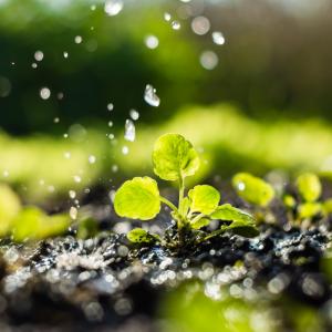 L'eau est indispensable à l'existence, le développement et la vie de l'eau. De sa conception à son industrie, l'homme a besoin de l'eau. Elle est une ressource si vitale qu'elle nous semble banale. L'eau est une ressource