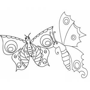 Ces deux papillons sont très amis et ils aiment voler à deux, ils ne sont pas jumeaux mais ils volent ensemble