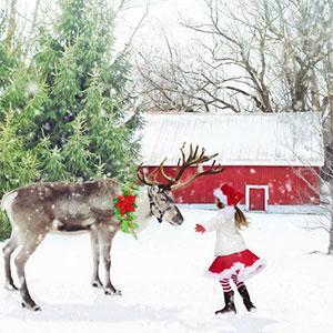 Un article pour répondre à la question : comment s'appellent les Rennes du Père Noël