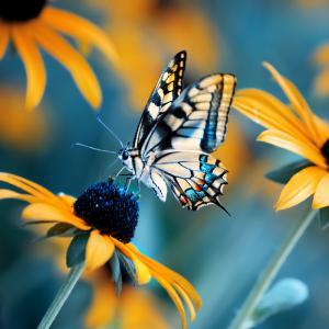 Sites pour découvrir les papillons, leur naissance, leur croissance, leurs morphologie ... Des sites sur le papillon et la chenille.