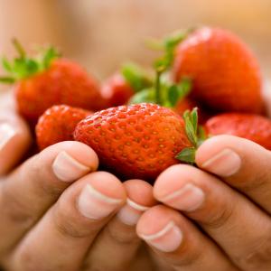 Les variétés de fraises