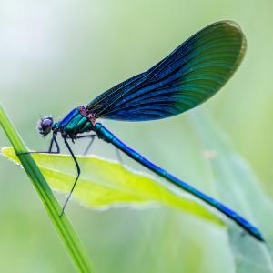 libellule - mot du glossaire Tête à modeler. Définition et activités associées au mot libellule.