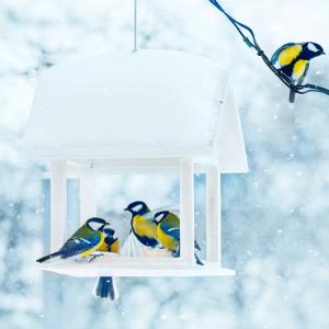 Les oiseaux mangent presque n'importe quoi quand ils ont faim. Néanmoins chaque espèce a ses habitudes alimentaires, les oiseaux ...