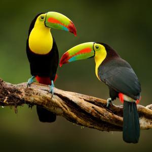 oiseau - mot du glossaire Tête à modeler. Définition et activités associées au mot oiseau.