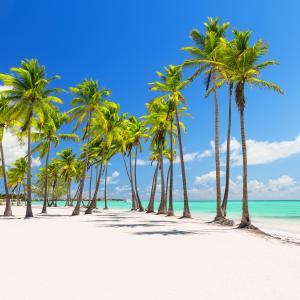 palmier - mot du glossaire Tête à modeler. Définition et activités associées au mot palmier.