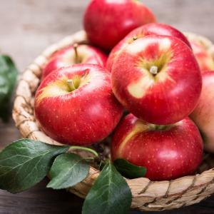 pomme - mot du glossaire Tête à modeler. Définition et activités associées au mot pomme.