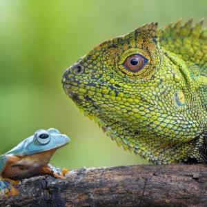 reptile - mot du glossaire Tête à modeler. Définition et activités associées au mot reptile.