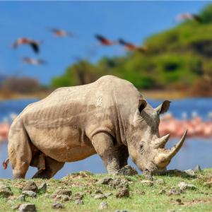 Rhinoceros - mot du glossaire Tête à modeler. Définition et activités associées au mot Rhinoceros.