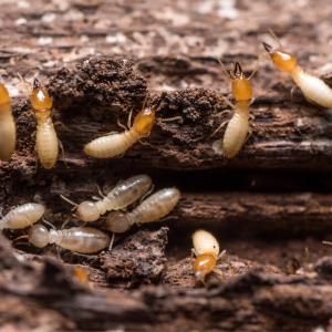 termite - mot du glossaire Tête à modeler. Définition et activités associées au mot termite.