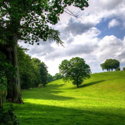 Arbre : explication Tête à modeler du mot arbre . Un arbre est une plante de grande taille fixée en terre par des racines. Activités associées.