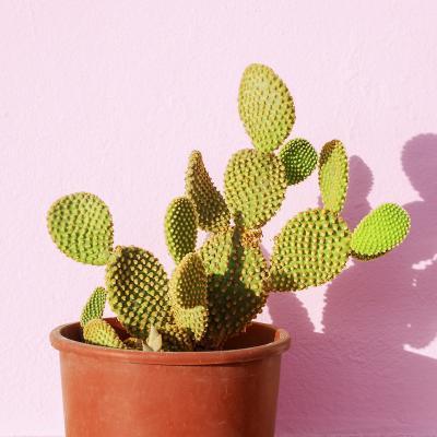 cactus - mot du glossaire Tête à modeler. Le cactus est une plante grasse à épines. Définition et activités associées au mot cactus.