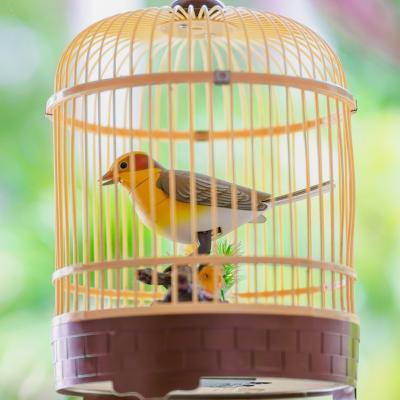 cage - mot du glossaire Tête à modeler. Une cage est un espace clos par des barreaux ou un grillage. Définition et activités associées au mot cage.