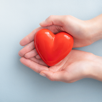 coeur - mot du glossaire Tête à modeler.  Le coeur est le muscle moteur de la circulation.  Définition et activités associées au mot coeur.
