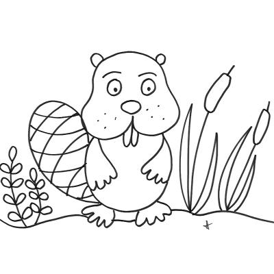 Coloriages de Monsieur raton. Dessins sur les raton laveur à imprimer. Coloriages du personnage animalier autour du raton laveur