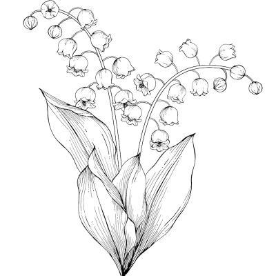Des dessins de fleurs et de brins de muguet à imprimer pour que les enfants puissent s'amuser à colorier le muguet du 1er mai. Et oui le muguet s'offre aussi en coloriage le 1er mai jour de la fête du travail !