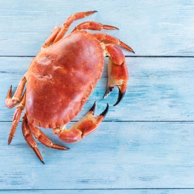 crabe - mot du glossaire Tête à modeler. Le crabe est un crustacé.  Définition et activités associées au mot crabe.