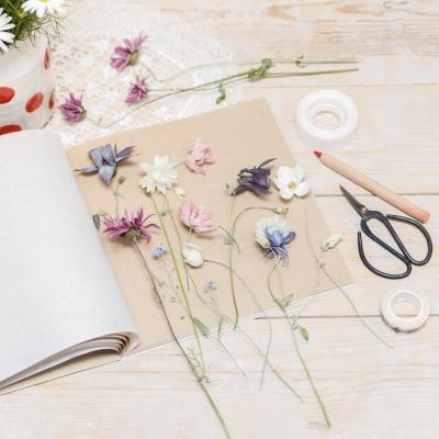 Idée d'activité manuelle pour créer un herbier avec son enfant de 3 à 12 ans. Une manière ludique de partir à la découverte des plantes.
