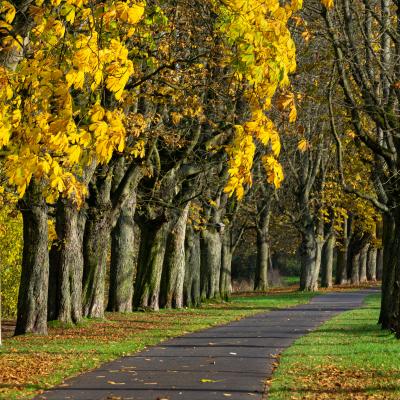 Allée : Mot du glossaire Tête à modeler. Une allée est un chemin dans un jardin, dans un parc ou une forêt.  Activités associées.