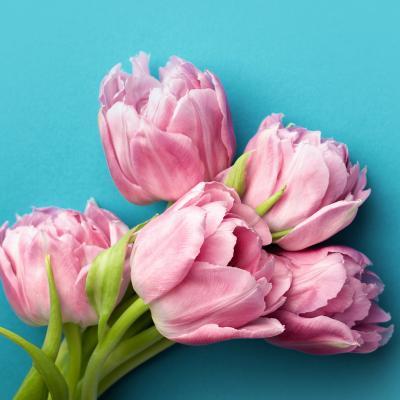 fleur - mot du glossaire Tête à modeler. Définition et activités associées au mot fleur.