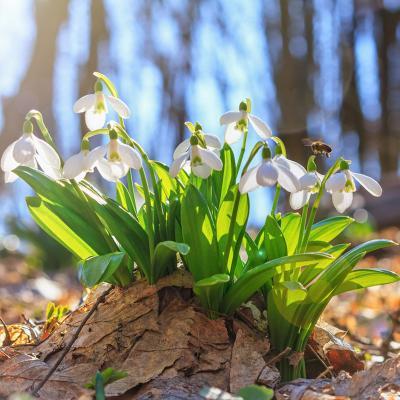flore- mot du glossaire Tête à modeler. Définition et activités associées au mot flore.
