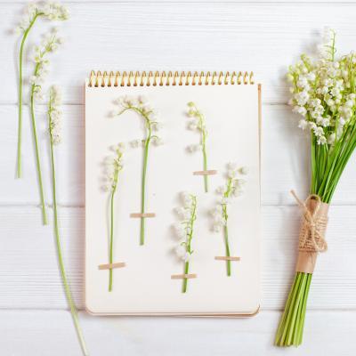 Fiche sur le muguet pour herbier. Fiche explicative illustrÈe et modËles gratuits.