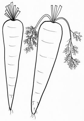 coloriage de carottes