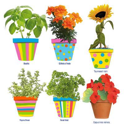 Petites plantations en pots