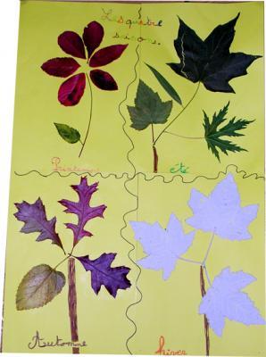 Activité sur les arbres et leur évolution au fil des saisons