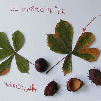 Collage pour découvrir les arbres et les leurs fruits d'automne. Fiche explicative illustrée et modèles gratuits.