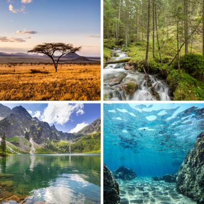 Il existe deux sortes de classement des écosystèmes, selon le biotope ou selon la biocénose. L'écosystème humain fait référence à la biocénose, à