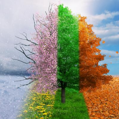 Les saisons sont des épisodes de trois mois en Europe durant lesquels on observe des variations de température et de climat ayant des conséquences sur la végétation et l