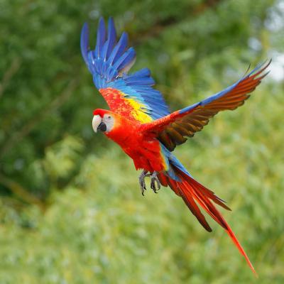 perroquet - mot du glossaire Tête à modeler. Définition et activités associées au mot perroquet.