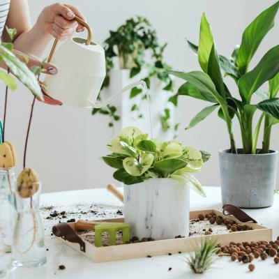 plante - mot du glossaire Tête à modeler. Définition et activités associées au mot plante.