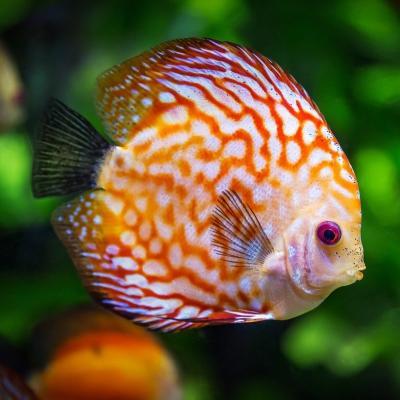 poisson - mot du glossaire Tête à modeler. Définition et activités associées au mot poisson.