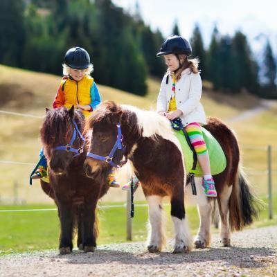poney - mot du glossaire Tête à modeler. Définition et activités associées au mot poney.