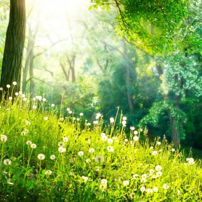 printemps - mot du glossaire Tête à modeler. Définition et activités associées au mot printemps.