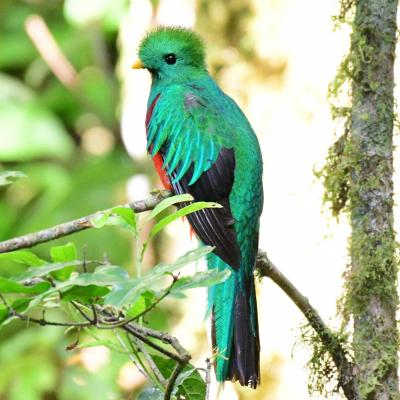 quetzal - mot du glossaire Tête à modeler. Définition et activités associées au mot quetzal.