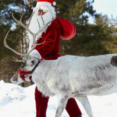 Les Renne Du Pere Noel.Les Rennes De Noël