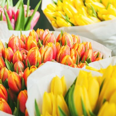 tulipe - mot du glossaire Tête à modeler. Définition et activités associées au mot tulipe.